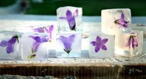 gelo flores a casa cheia