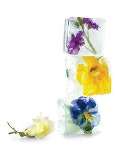 icecubes-flowers-0511mld107066_xl
